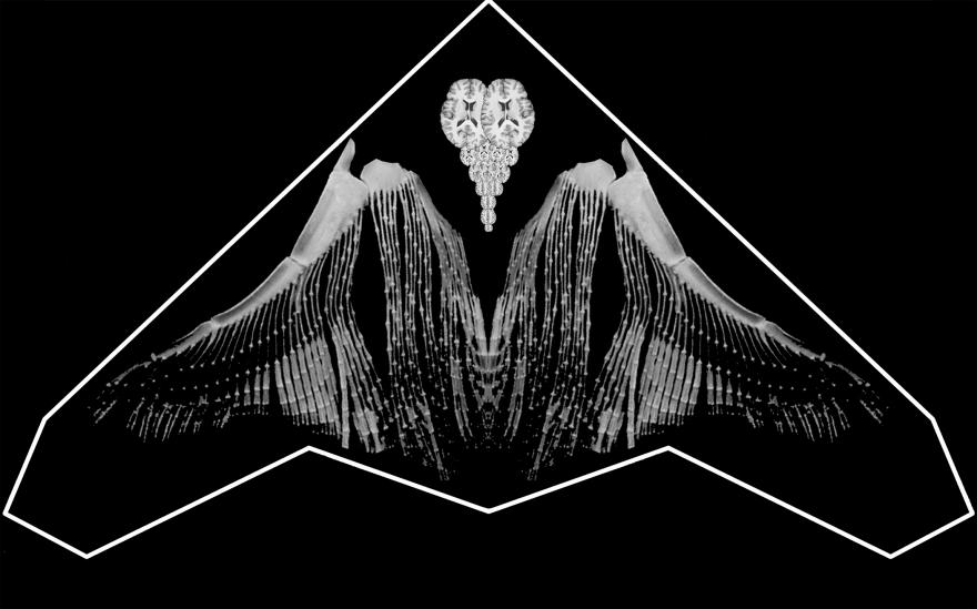 droneblanc-brain-ailes-fondnoir-7x5